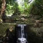 Tropischer Garten